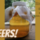 kombucha kefir fermenteren darmflora microbioom immuunsysteem welzijn gezondheid darmen voeding bacterieen